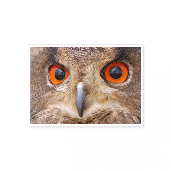 "Postkarte ""wachsame Augen; Uhu"""