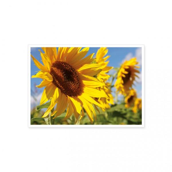"""Postkarte """"Sonnenblumen"""""""