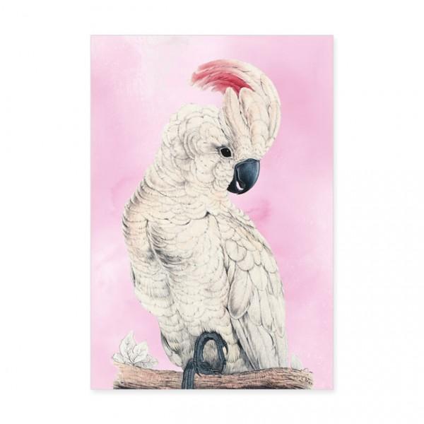 """Postkarten Large """"Molukkenkakadu aus dem Papageienbuch von Edward Lear"""""""