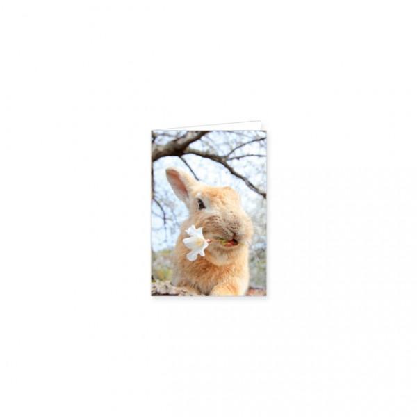 """Mini-Doppelkarte """"Wildkaninchen mit Kirschblüte"""""""