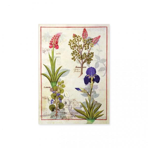"""Postkarte Gold """"Orchidee und Erdrauch oder Tränendes Herz"""""""