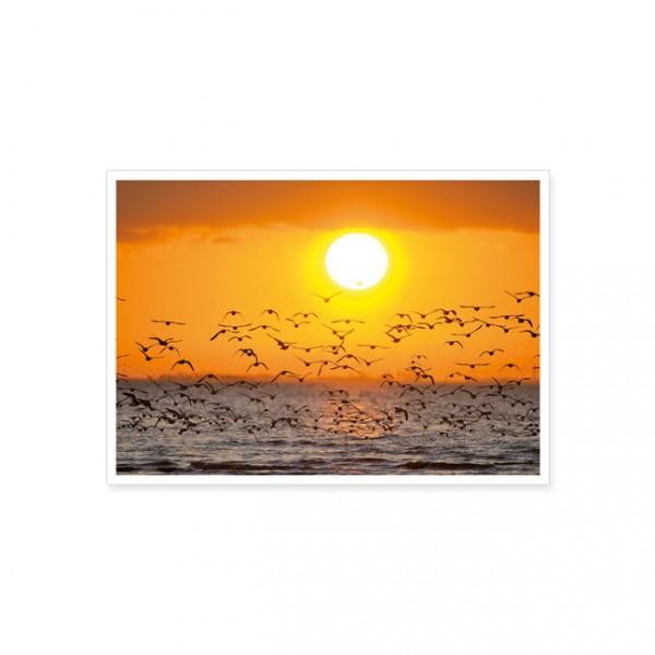 """Postkarte """"Austernfischer beim Sonnenuntergang"""""""