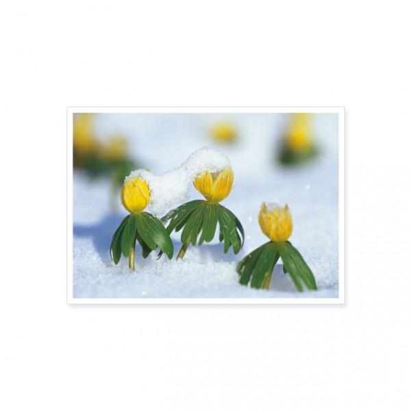 """Postkarte """"Winterlinge"""""""