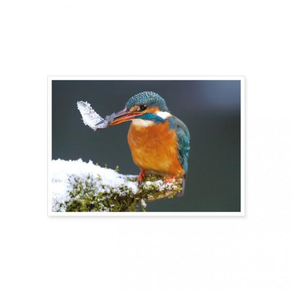 """Postkarte """"Eisvogel mit Beute"""""""