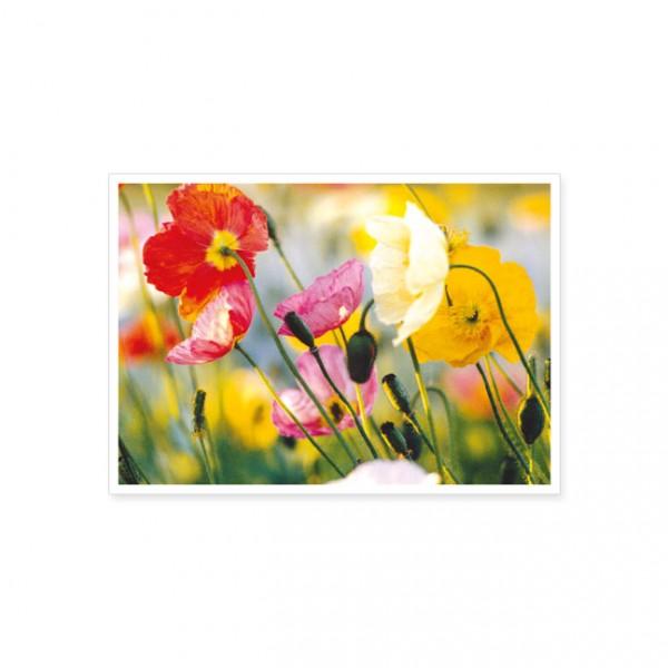 "Postkarte ""Bunte Mohnblumen"""