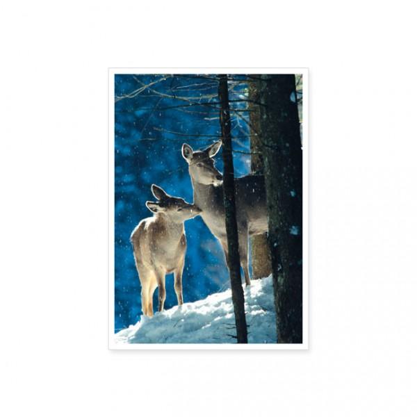"Postkarte "" Rothirschkuh mit Jungem """