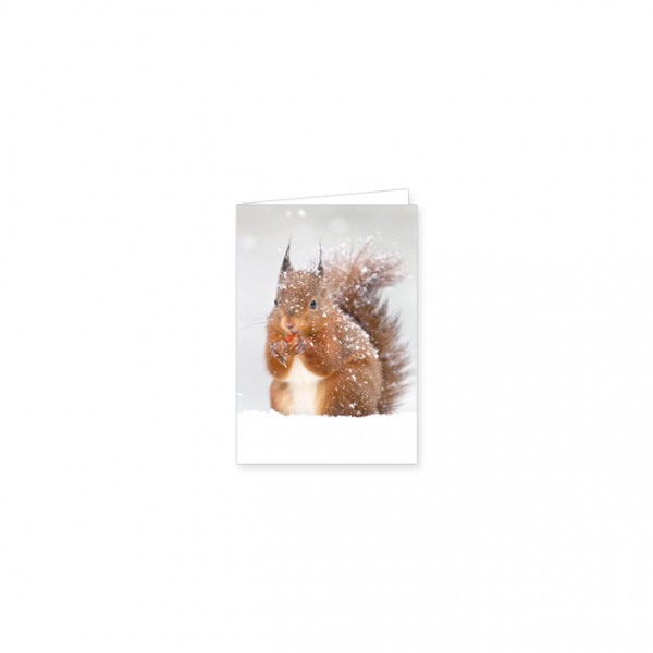 "Mini-Doppelkarte ""Eichhörnchen im Winter"""