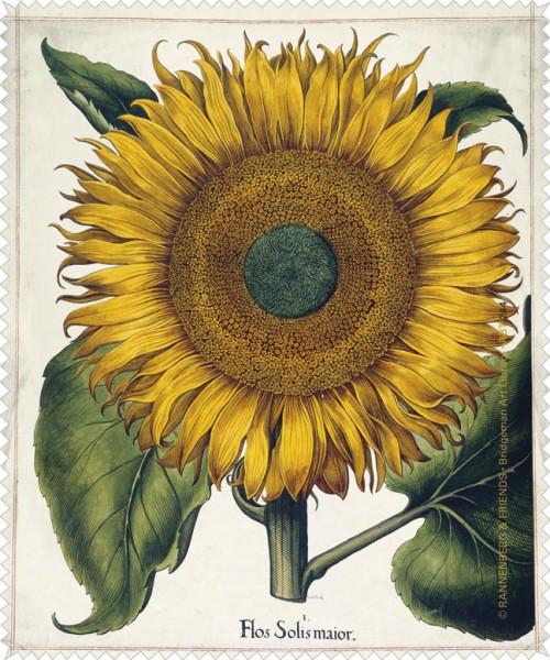 Brillenputztuch 'Sonnenblume aus dem Garten von Eichstätt'