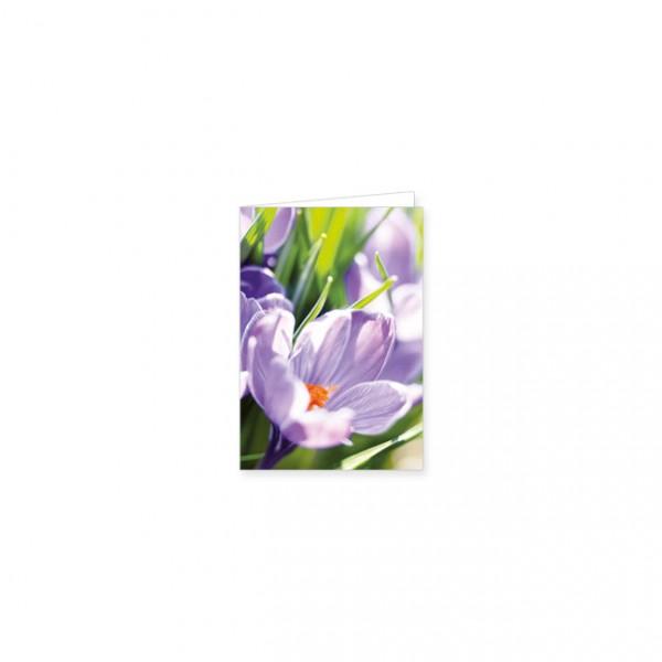 "Mini-Doppelkarte ""Lila Krokus"""