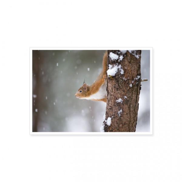 """Postkarte """"Eichhörnchen am Baum"""""""