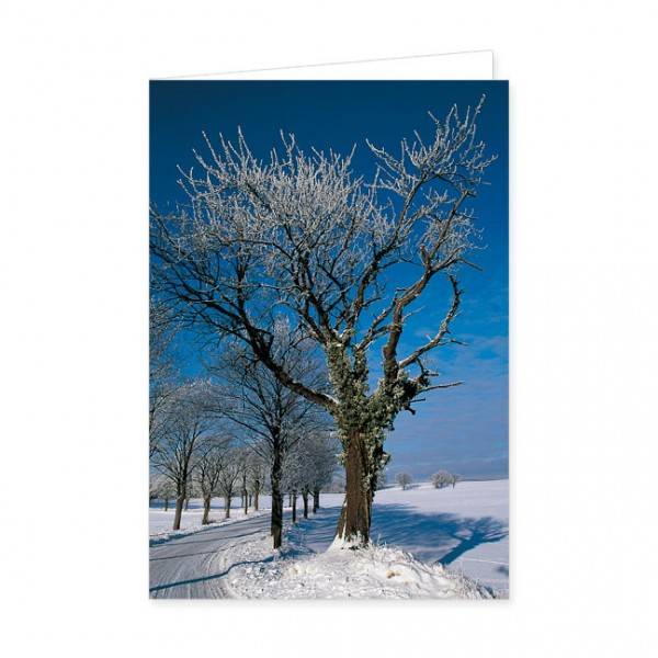 """Doppelkarte """"Winterbaum"""""""