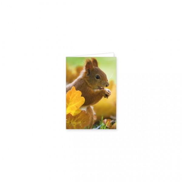 """Mini-Doppelkarte """"Eichhörnchen im Herbstlaub"""""""