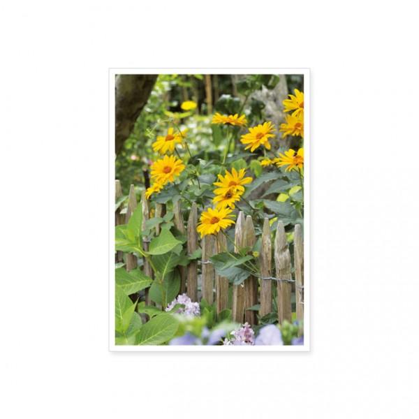 """Postkarte """"Garten-Sonnenauge"""""""