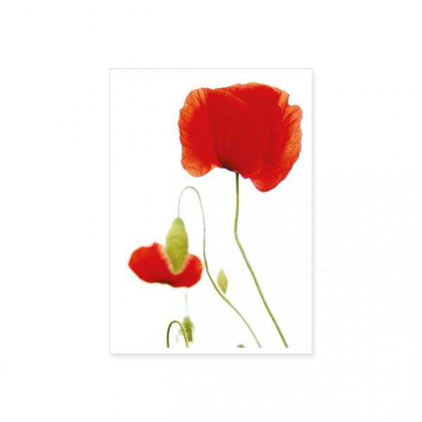 "Postkarte ""Mohnblumen"""