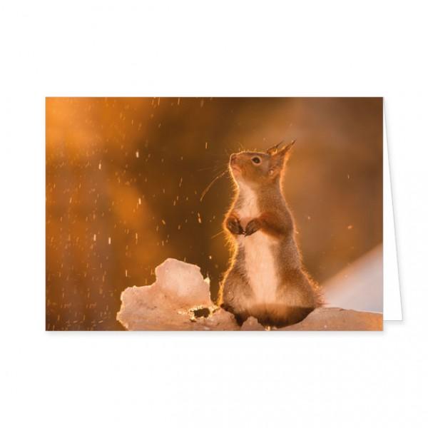 """Doppelkarte """"Eichhörnchen im Schnee"""""""
