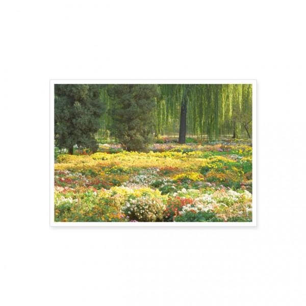 """Postkarte """"Buntes Blumenmeer"""""""