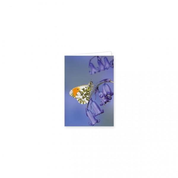 "Mini-Doppelkarte ""Aurorafalter auf Glockenblume"""