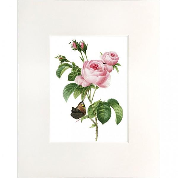 """Passepartout """"Rosa Centifolia"""""""