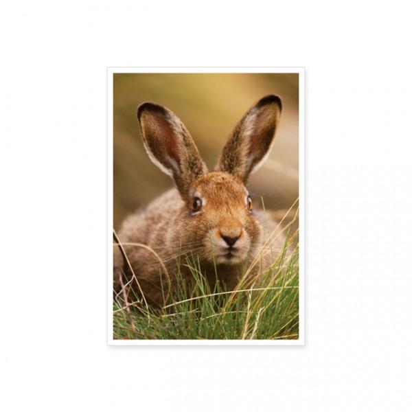 """Postkarte """"Berghase (Lepus timidus)"""""""
