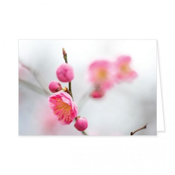 "Doppelkarte ""Kirschblüten"""