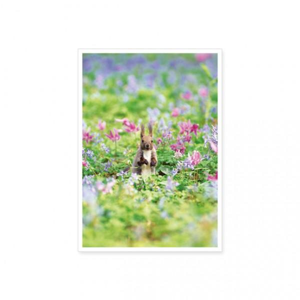 "Postkarte ""Eichhörnchen im Blumenfeld"""