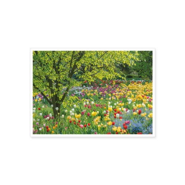 """Postkarte """"Tulpenbeet"""""""