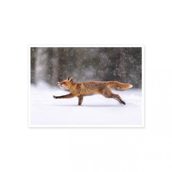 "Postkarte "" Rotfuchs im Sprung """
