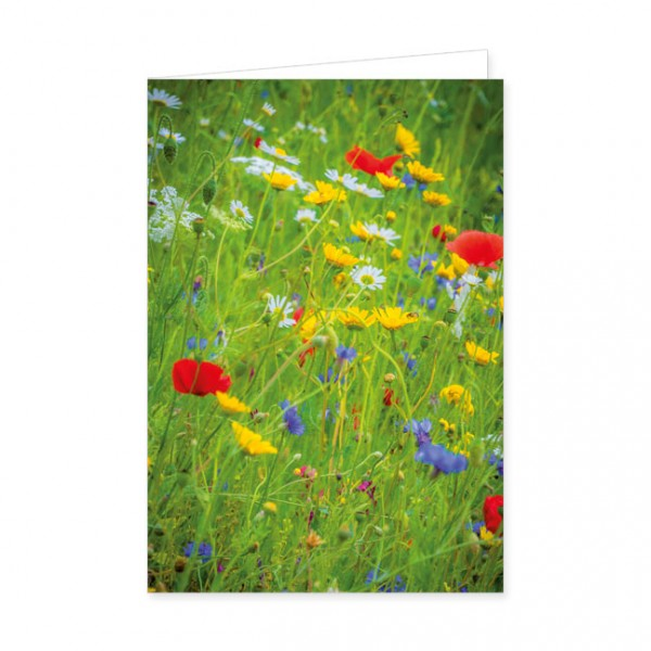 "Doppelkarten ""Wildblumen"""