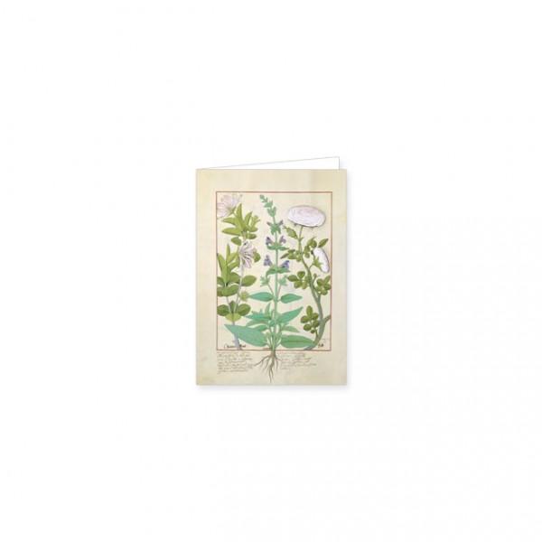 """Mini-Doppelkarten Gold """"Das Buch der Einfachen Heilmittel Folie 132v"""""""