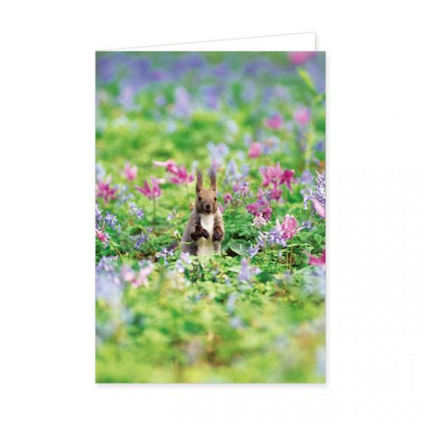 """Doppelkarten """"Eichhörnchen im Blumenfeld"""""""