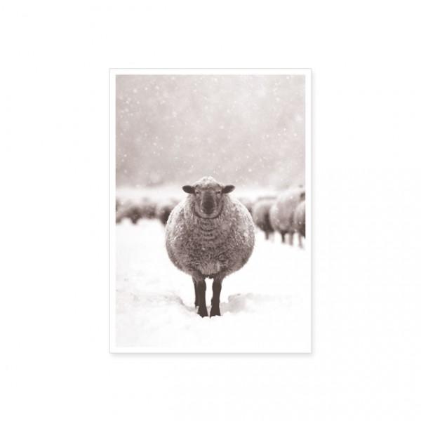 """Postkarte """"Schaf im Schnee"""""""