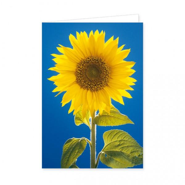 """Doppelkarte """"Sonnenblume"""""""