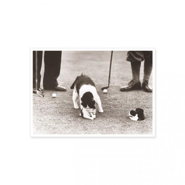 """Postkarte """"Golf mit Katze"""""""