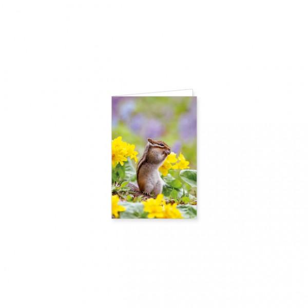 """Mini-Doppelkarte """"Backenhörnchen zwischen Primeln"""""""