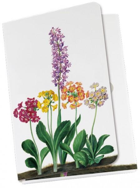 Taschennotizblöckchen 'Primeln und Orchidee aus dem Nassau Florilegium'