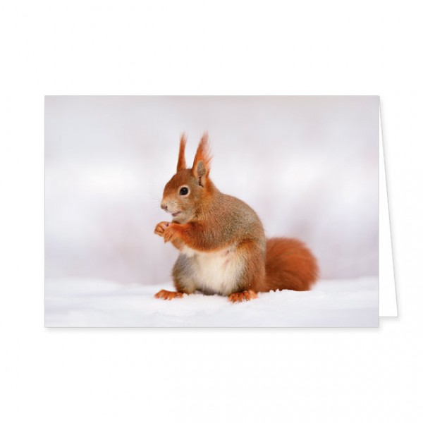 """Doppelkarten """"Eichhörnchen"""""""