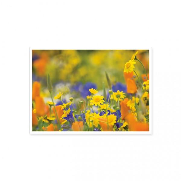 "Postkarte ""Feld mit Salatchrysantheme"""