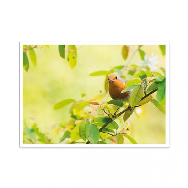 """Postkarte """" Rotkehlchen als Frühlingsbote """""""