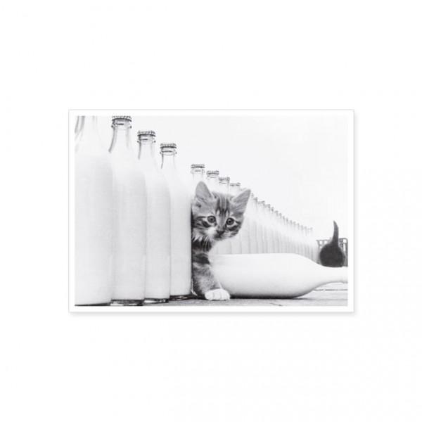 """Postkarte """"Kätzchen mit Milchflaschen"""""""