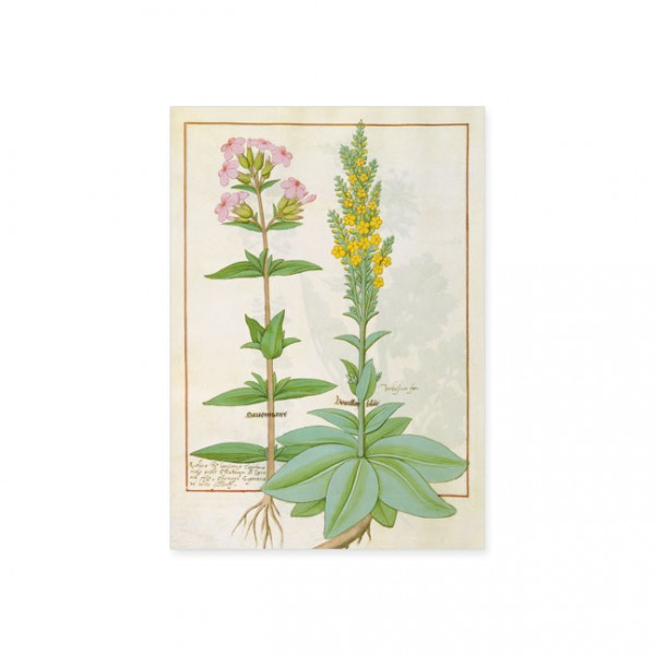 """Postkarte Gold """"Das Buch der Einfachen Heilmittel Folie 145v"""""""