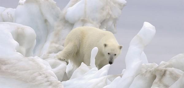 """XXL-Postkarte """"Eisbär auf treibenden Eisberg"""""""