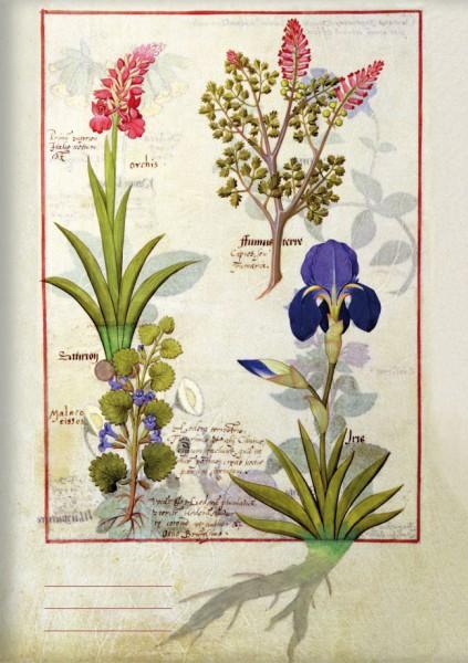 Kladden A6 'Orchidee und Erdrauch oder Tränendes Herz'