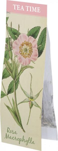 "Tea Time Lindley's Wildrose ""Rosa Macrophylla"""