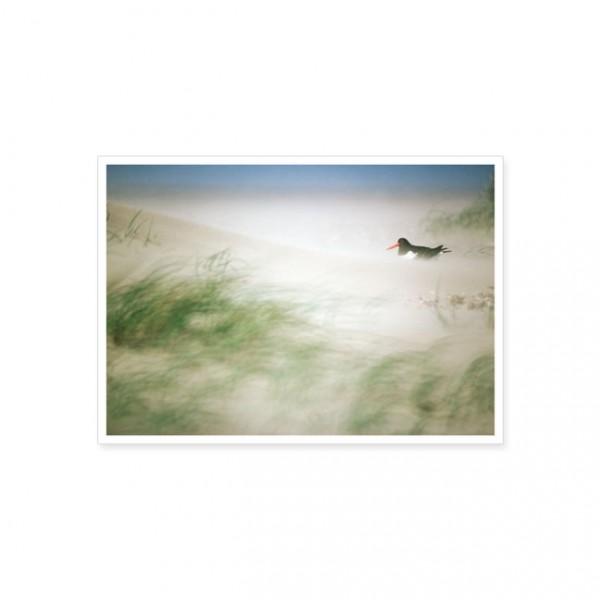 """Postkarte """"Austernfischer im Sturm"""""""