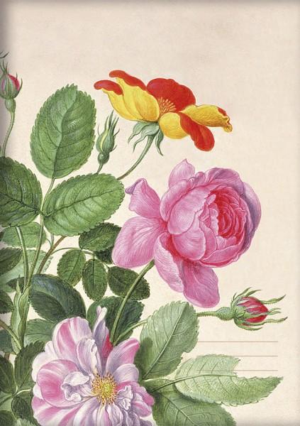 RNH A5 'Rosen aus dem Nassau Florilegium'