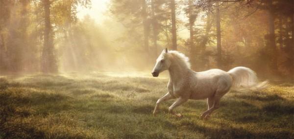 """XXL-Postkarte """"Weißes rennendes Pferd"""""""