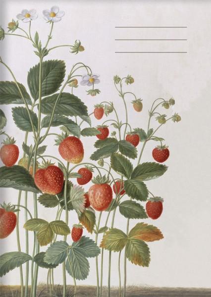Kladden A6 'Erdbeeren aus dem Nassau Florilegium'