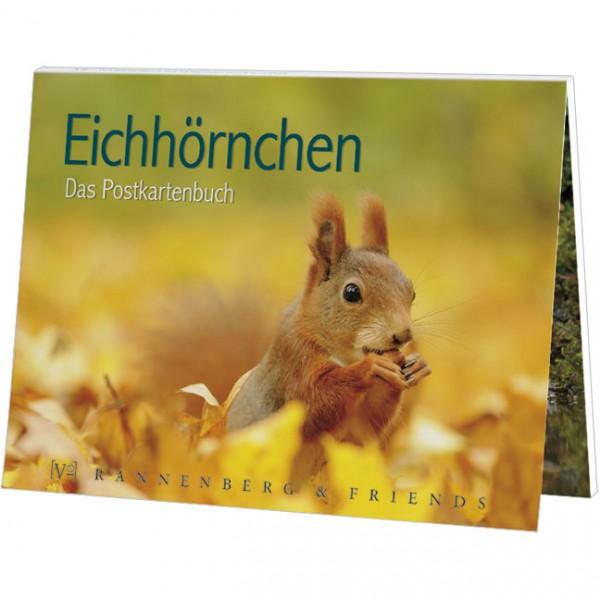Postkartenbuch 'Eichhörnchen'