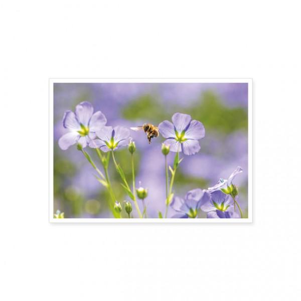 "Postkarte ""Von Blüte zu Blüte"""
