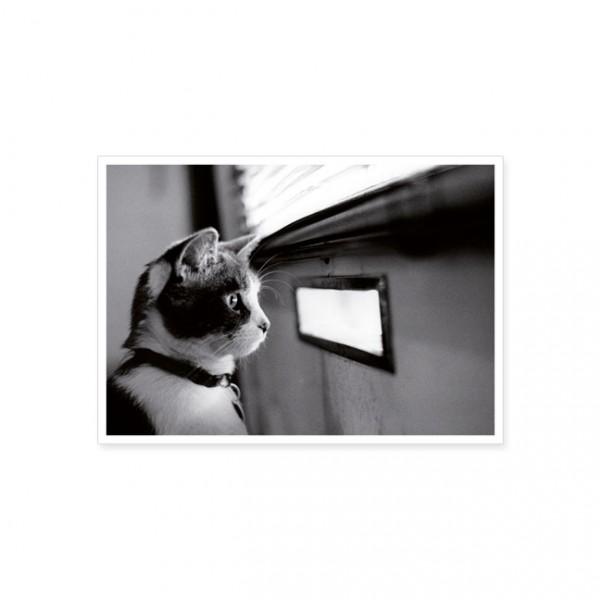 """Postkarte """"Katze vor Briefschlitz"""""""